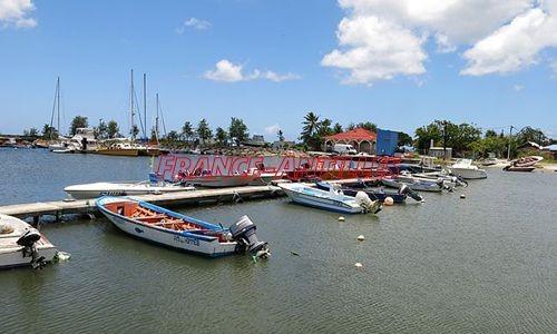 Prolifération d'algues vertes autour du port de pêche en Guadeloupe